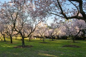 Almendros 5 tantalizing reasons to move to Madrid
